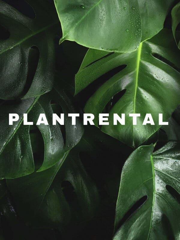 Plantrental.sg