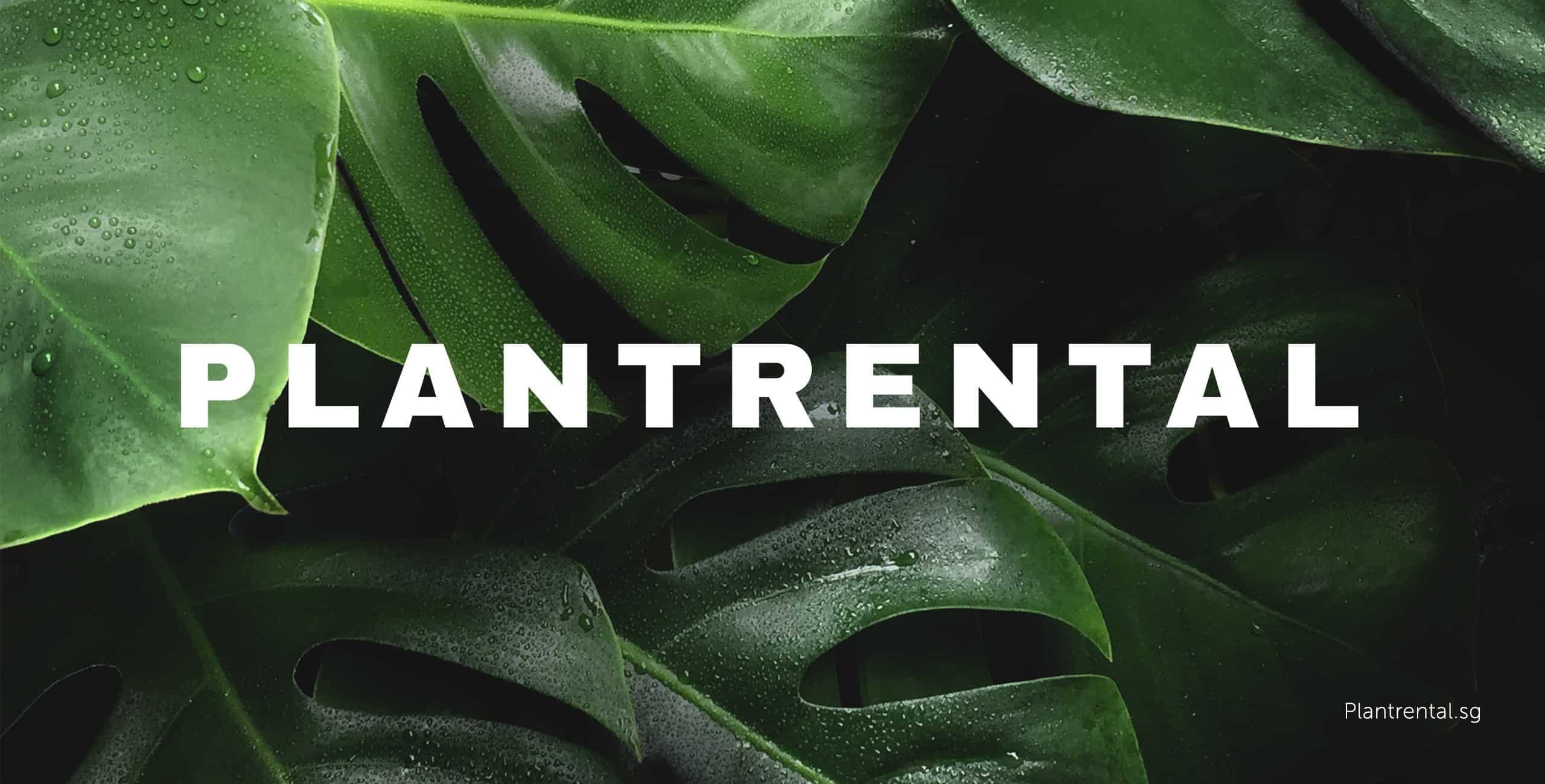 plantrental portfolio banner